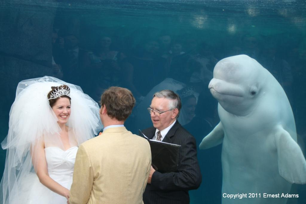 Juno the Wedding Whale loves brides!